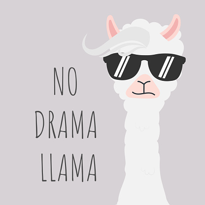 Cute Llama design with no drama motivational quote.