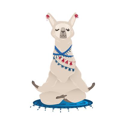 Cute llama or alpaca in yoga pose cartoon flat vector illustration isolated.