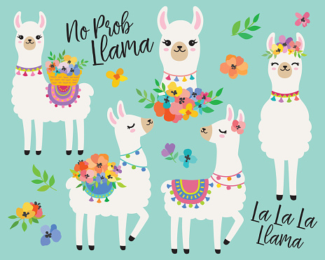 Cute Llamas with Spring Flowers Vector Illustration.