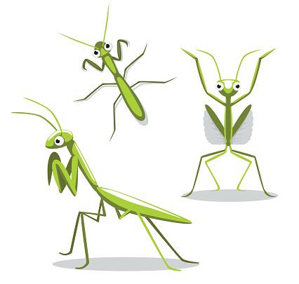 Cute Mantis Poses Cartoon Vector Illustration