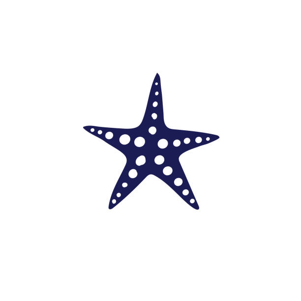 귀여운 항해 아이콘-조개 - 불가사리류 stock illustrations