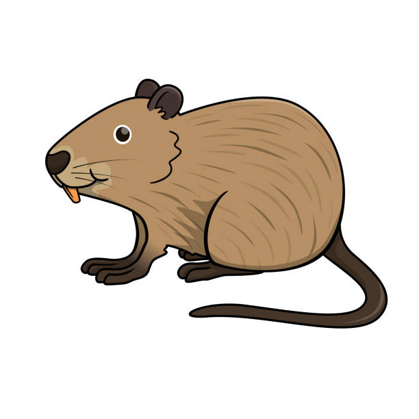 Clipart Of A Retro Vintage Black And White Rat Wearing A