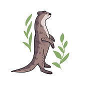 Hand drawn vector otter. Cute doodle illustration of Lutra lutra with plants.