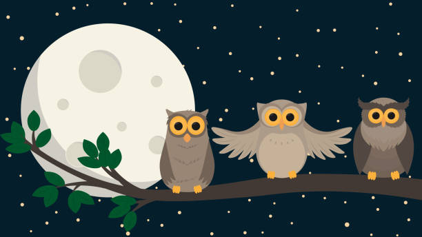 cute owls sit at branch under the moon. Vector illustration – artystyczna grafika wektorowa