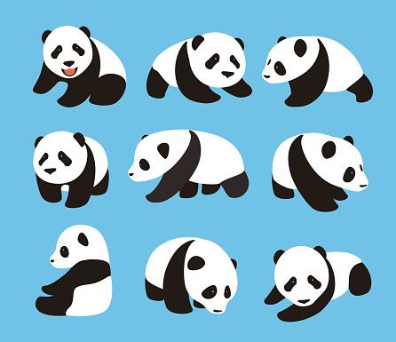cute panda baby set, flat design, vector illustrator