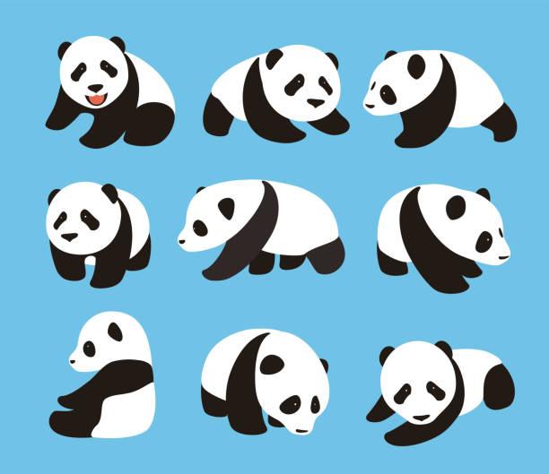 illustrations, cliparts, dessins animés et icônes de cute panda baby set, flat design, vector illustrator - panda