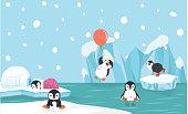 Large colony of Magellanic penguins (Spheniscus magellanicus) as Isla Magdalena Punta Arenas, Patagonia, Chile