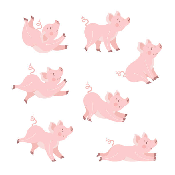 Cute pig animation set cartoon vector illustration. Happy piggy in different poses collection isolated on white vector art illustration