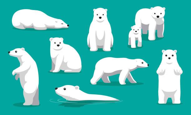 Cute Polar Bear Swimming Cartoon Vector Illustration Animal Character EPS10 File Format arctic stock illustrations
