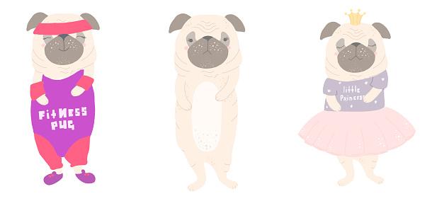Cute pug and designer clothes, Vector flat cartoon illustration.