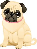 A sweet little pug wearing a collar. The face, body, and collar are all grouped separately so you can remove the collar or change the color, and remove the body and/or collar if you just want the face.