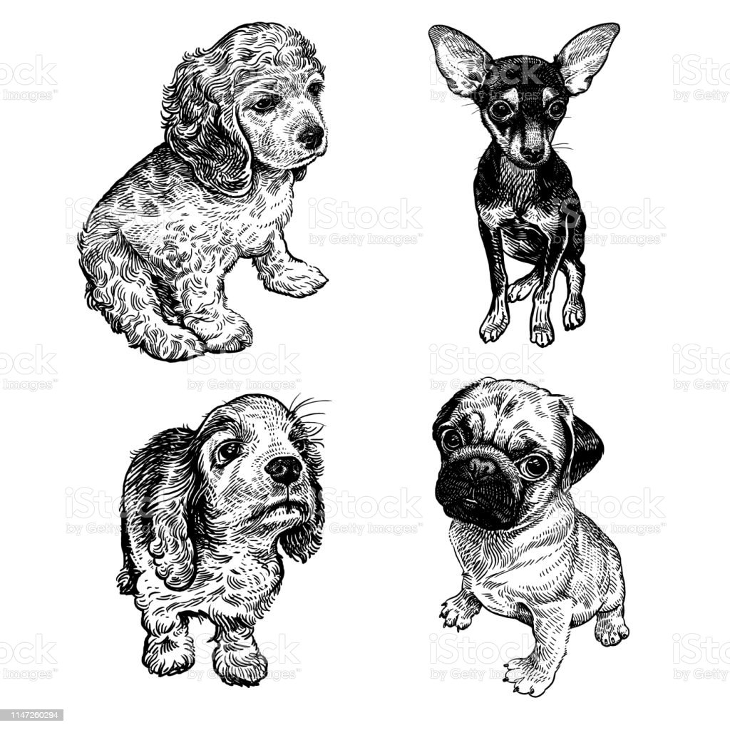 5abf9ae3ec1f Cute Puppies Set Terrier Spaniel And Pug Black And White Hand ...
