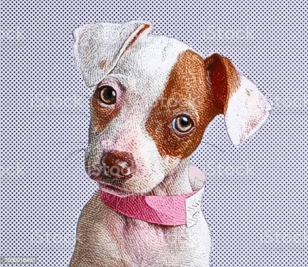 Cute puppy jack russell terrier dog in animal shelter vector id1030018452?b=1&k=6&m=1030018452&s=612x612&h=polppakj5a3gkrqlrwozazoc6lo y1nwacgqskraalw=