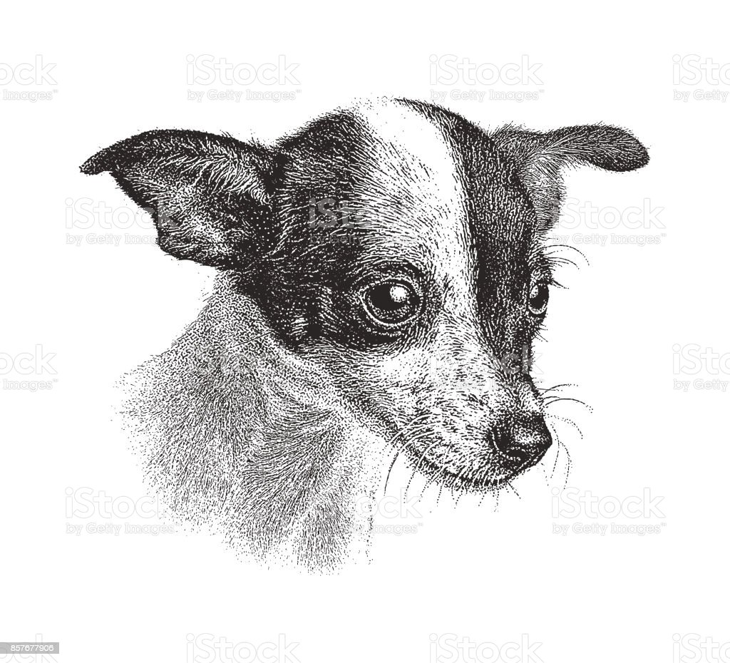 Cute Puppy waiting to be adopted. Chihuahua Rat Terrier, mixed-breed dog. vector art illustration