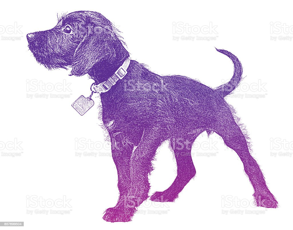 Cute Puppy waiting to be adopted. Miniature Schnauzer, mixed-breed dog. vector art illustration