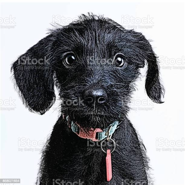 Cute puppy waiting to be adopted miniature schnauzer mixedbreed dog vector id858021654?b=1&k=6&m=858021654&s=612x612&h=qmfuohrwdashzm0u4mha4itg4ruwlum42lgd44zac8y=
