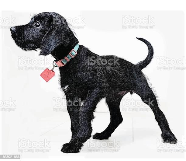 Cute puppy waiting to be adopted miniature schnauzer mixedbreed dog vector id858021666?b=1&k=6&m=858021666&s=612x612&h=3kky9svmqgrogaginj3ccd0haaolehh001wo4hz go8=