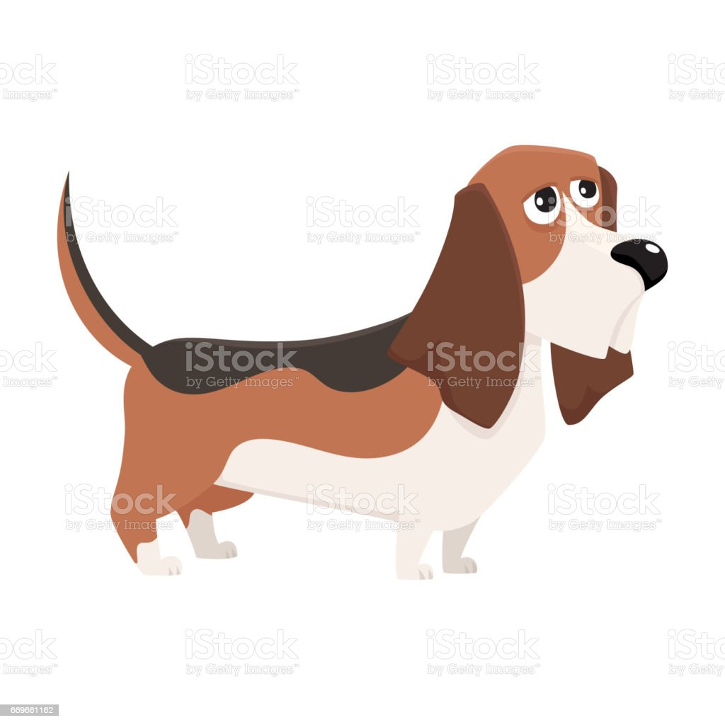 Cute Purebred Basset Hound Dog Character Cartoon Vector Illustration ...