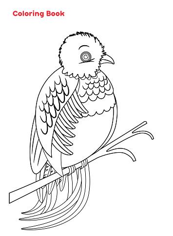 Cute Quetzal Bird coloring book
