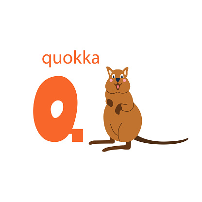 Cute quokka card. Alphabet with animals. Colorful design for teaching children the alphabet, learning English. Vector illustration in a flat cartoon style on a white background