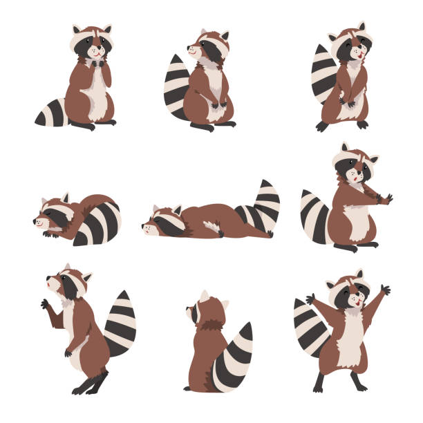 Cute Raccoon Collection, Adorable Wild Forest Animal Cartoon Character in Various Poses Vector Illustration Cute Raccoon Collection, Adorable Wild Forest Animal Cartoon Character in Various Poses Vector Illustration on White Background. raccoon stock illustrations