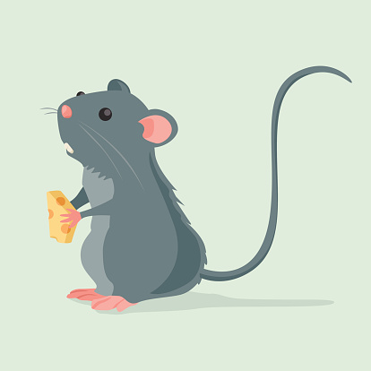 Cute Rat holding a piece of cheese