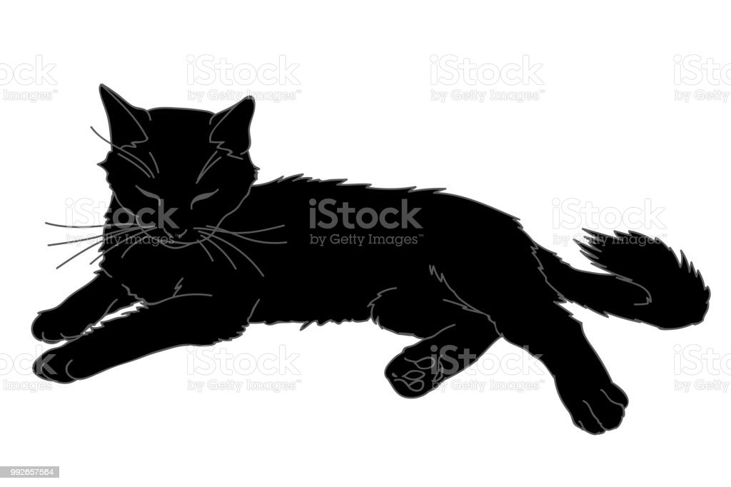Joli Chat Réaliste Portant Illustration Vectorielle De Kitty Noir