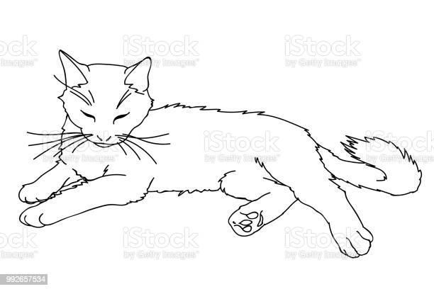 Cute realistic cat laying vector illustration of kitty isolated on vector id992657534?b=1&k=6&m=992657534&s=612x612&h=v5ql25rfkflkubzvmqsjfxequgmtskp5ld pyqyo6qe=
