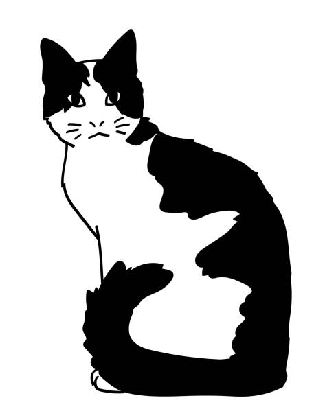 Best Black And White Cat Illustrations, Royalty-Free ...
