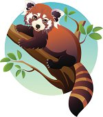 Vector illustration of a cute Red Panda Bear sitting on a tree and looking at viewer. Color clipart.