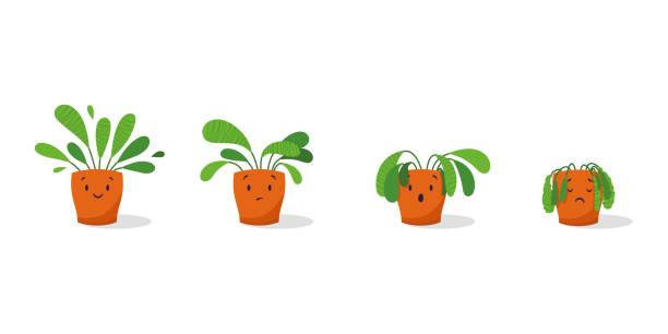 Cute sad wilted plant in a pot. Stages of withering, abandoned and scared houseplant without watering and care. Potted plant dying. Vector illustration Cute sad wilted plant in a pot. Stages of withering, abandoned and scared houseplant without watering and care. Potted plant dying. Vector illustration death stock illustrations