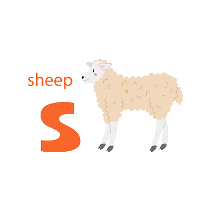 Cute sheep card. Alphabet with animals. Colorful design for teaching children the alphabet, learning English. Vector illustration in a flat cartoon style on a white background