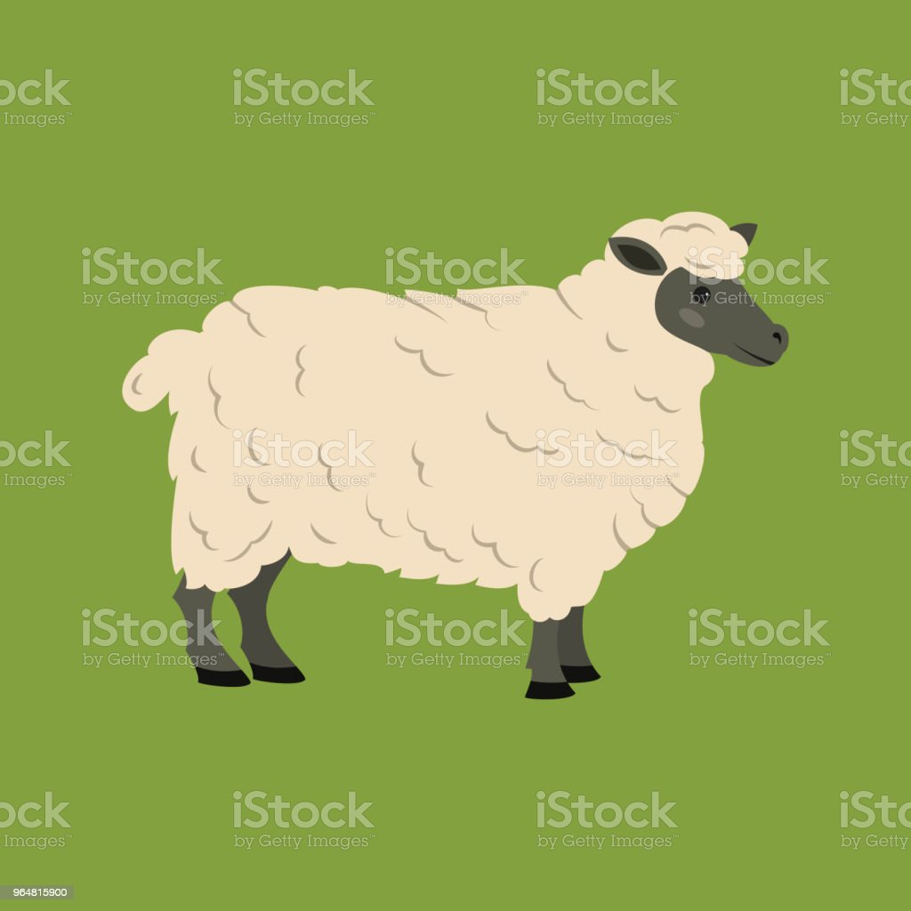 Cute sheep on green background. royalty-free cute sheep on green background stock vector art & more images of agriculture