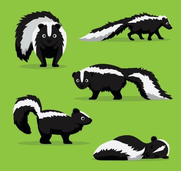 Cute Skunk Poses Cartoon Vector Illustration Animal Cartoon EPS10 File Format skunk stock illustrations