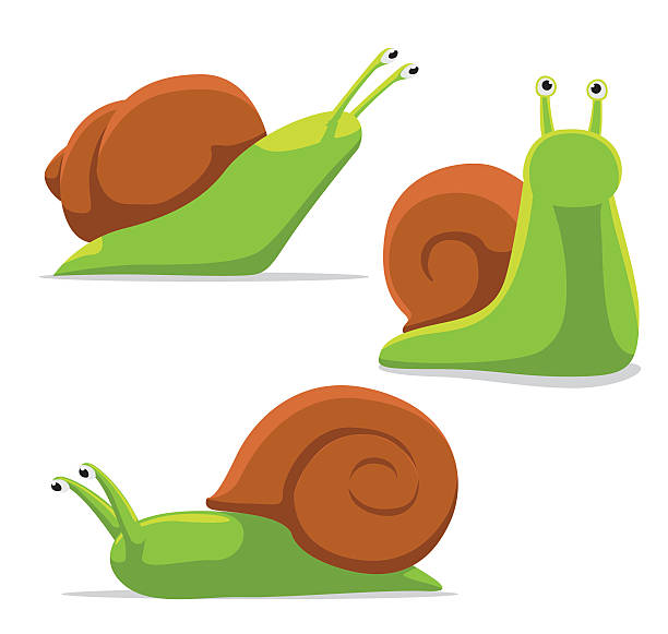 cute snail poses cartoon vector illustration - snail stock illustrations