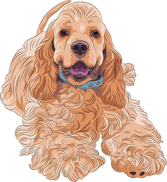 süße sportliche hund rasse american cocker spaniel - hundehaarbögen stock-grafiken, -clipart, -cartoons und -symbole