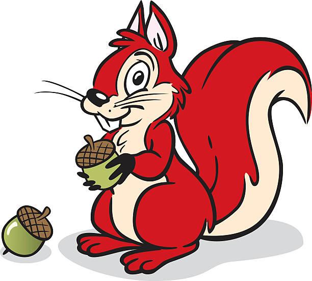Cute Squirrel vector art illustration