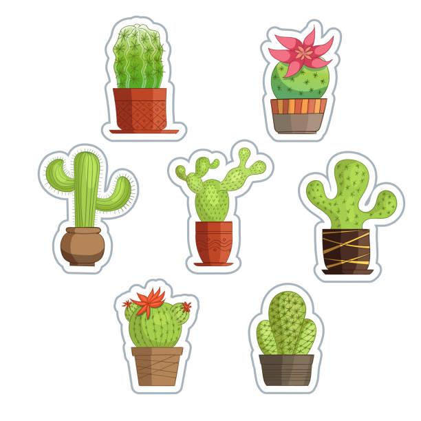 Nette Sukkulente oder Kaktuspflanzen. – Vektorgrafik