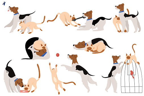 Cute touchable moments friendship dog and cat flat cartoon vector illustration character set