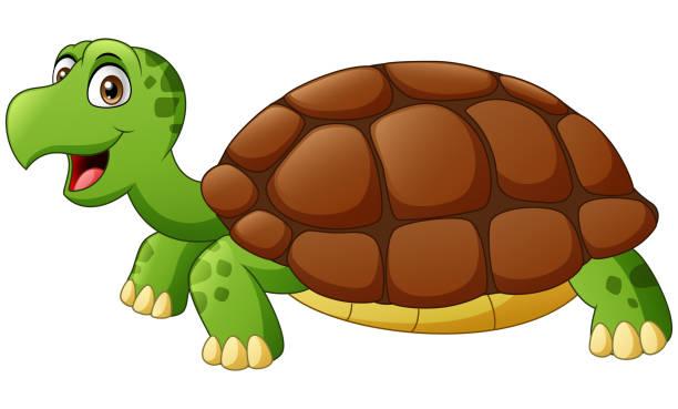 Cute turtle cartoon Vector illustration of Cute turtle cartoon turtle stock illustrations