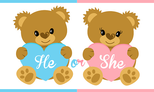 Cute vector character illustration. Teddy bear holding blue and pink heart.