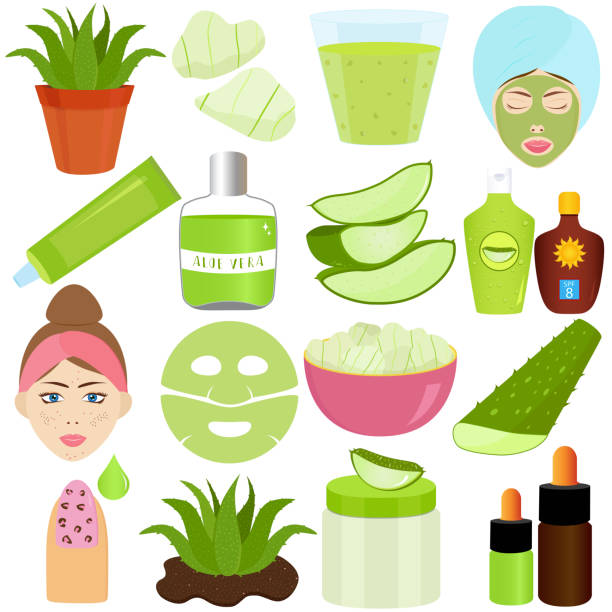 Cute Vector illustration set of Aloe Vera gel used in beauty treatment products, food and drink vector art illustration