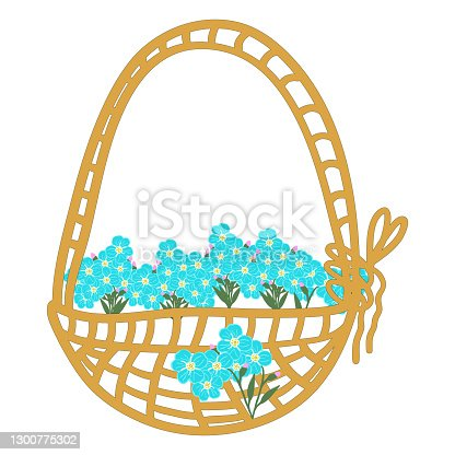 istock Cute vector set of compositions of flowers and forget me not buds: an inflorescence of forget-me-not buds, a small bouquet, cartoon basket with flowers. Stock illustration 1300775302