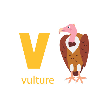 Cute vulture card. Alphabet with animals. Colorful design for teaching children the alphabet, learning English. Vector illustration in a flat cartoon style on a white background