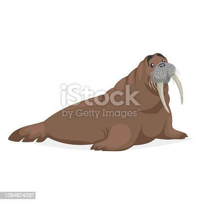 istock Cute walrus. Polar animal cartoon illustration. Flat style design. Best for kid education. Vector drawing isolated on white background. 1264624032