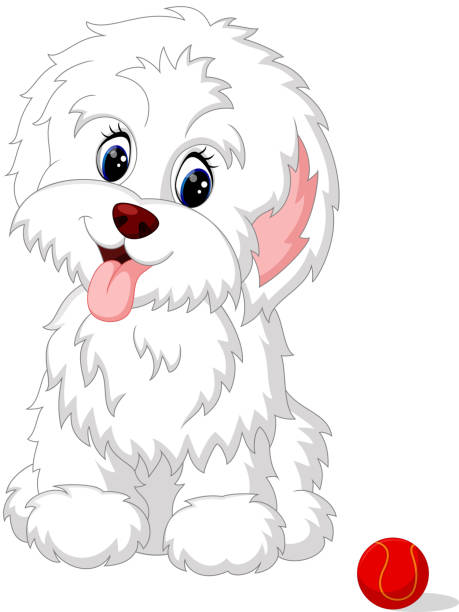 Best Havanese Illustrations, Royalty-Free Vector Graphics ...