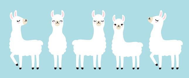 Cute White Llama Vector Illustration