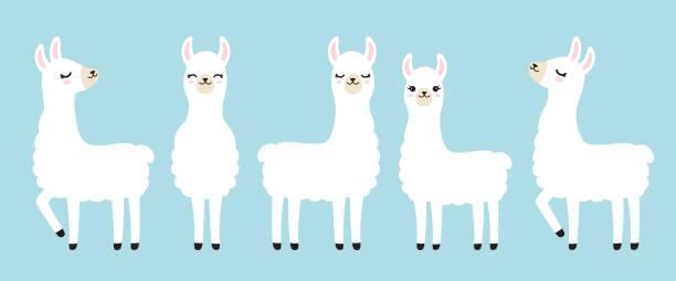 Llama Illustrations, Royalty-Free Vector Graphics & Clip ...