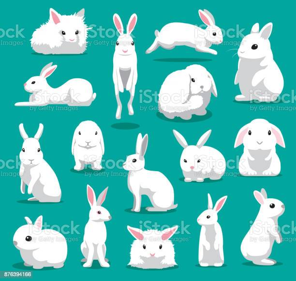 Cute white rabbit poses cartoon vector illustration vector id876394166?b=1&k=6&m=876394166&s=612x612&h=3jkvfqxv54gpqvvypzjqt3zijntbbhm24bldqukldbe=