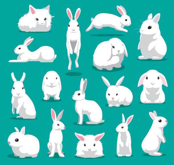 niedlichen weißen kaninchen-posen-cartoon-vektor-illustration - kaninchen stock-grafiken, -clipart, -cartoons und -symbole